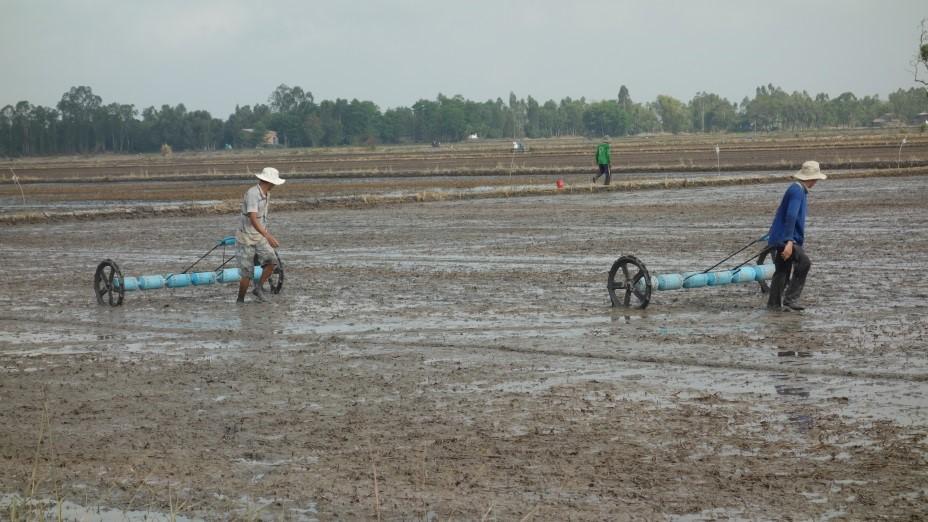 Phòng trừ cỏ dại lúa thu đông 2017: sử dụng thuốc tiền nảy mầm đúng cách